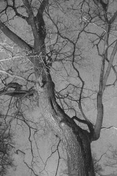 Дерево в декабре