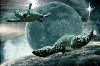 Звездные черепахи