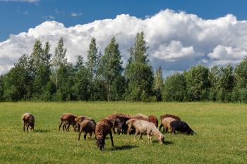 """""""Все мы овцы, которые иногда отрывались от стада"""" Рэй Брэдбери / 451 градус по Фаренгейту"""